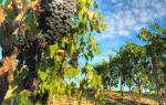 Top 5 Wines in Tuscany