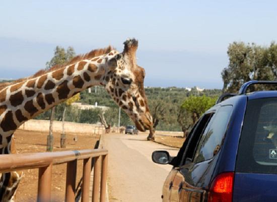 La Top 10 delle esperienze per i più giovani in Puglia - Zoo di Fasano