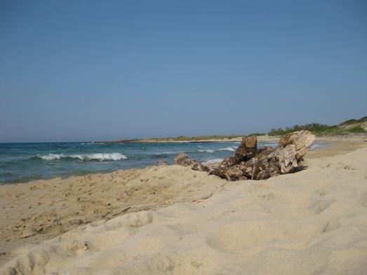 Torre Guaceto: il mare, le dune di sabbia, la macchia mediterranea