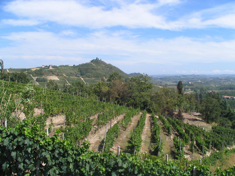 Asti Spumante - Sparkling Italian Wine