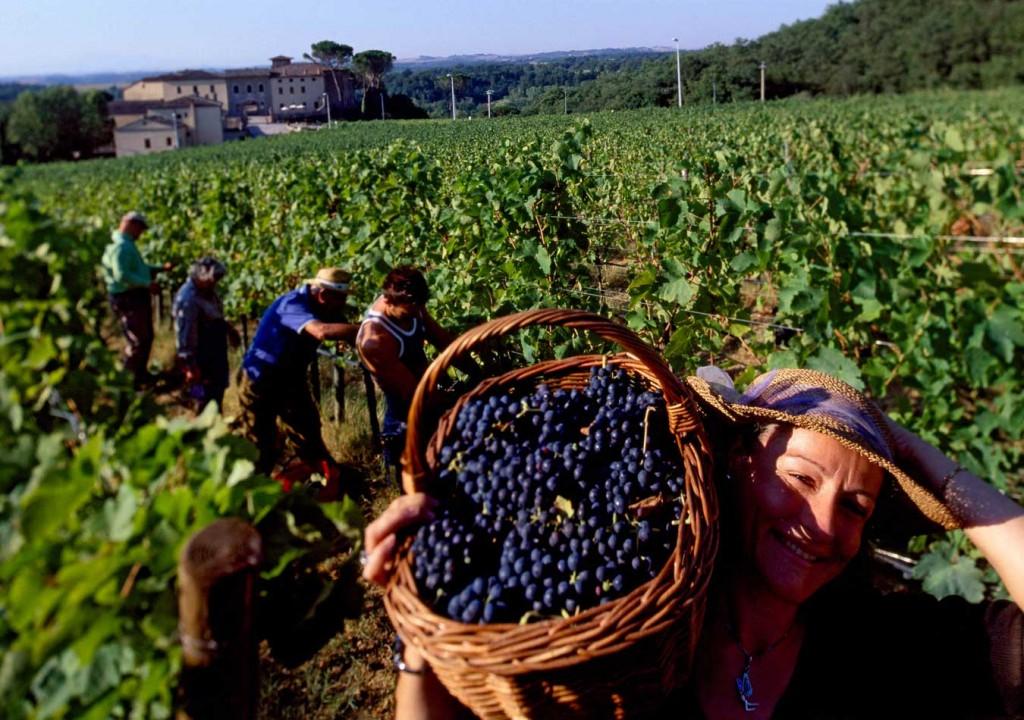 Terre del Chianti, Toscana