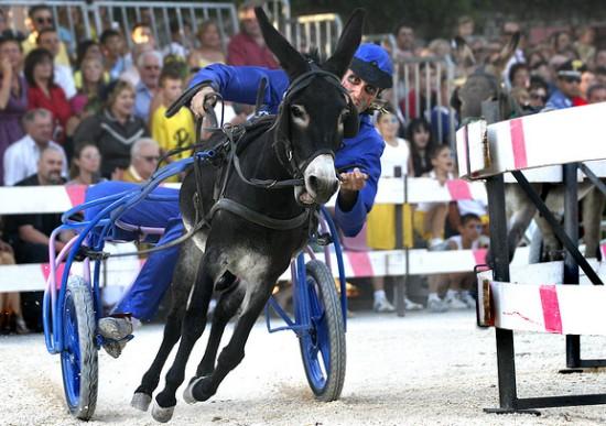 Corsa degli Asini, Donkey Race - Fagnana, Italy, What Else