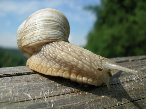 4 weird foods in Italy: Raw Snails, Sicily