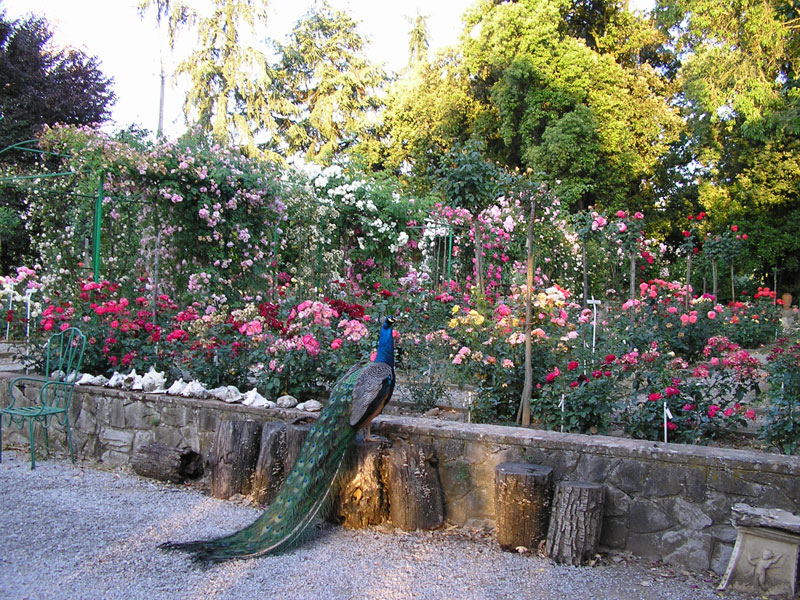 Rose Gardens In Italy Worth Visiting Secret Places